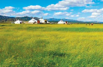 看内蒙古如何用中国智慧修复大草原